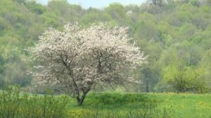 593850561_armenian tree.jpg