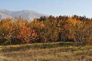 Last day of Autumn in Armenia