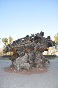Monument from tree roots